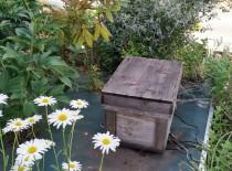 社長が養蜂を始めました